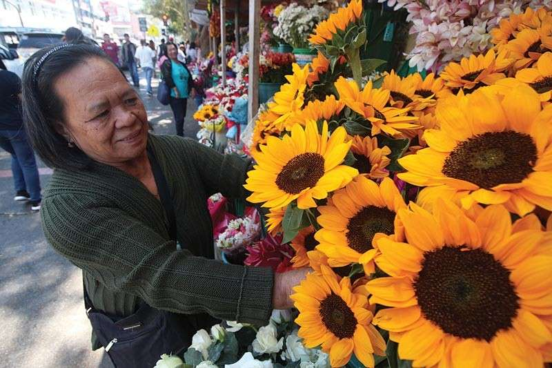 BAGUIO. A flower vendor arranges sunflowers sold at P50 per stem along Harrison Road. Flower vendors enjoy brisk sales as celebration of the Baguio Flower Festival goes full swing with closing ceremonies to be held on March 10. (Photo by Jean Nicole Cortes)