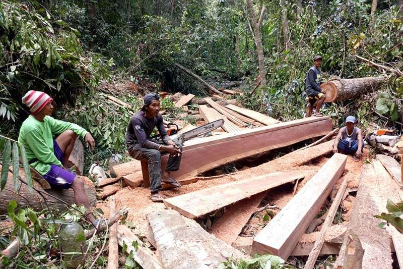 APAYAO. Illegal loggers in Carallan, Barangay Luyon, Luna, Apayao were caught by the police in the act of sawing and resizing sawn mahogany lumber. (Contributed by Cordillera police)