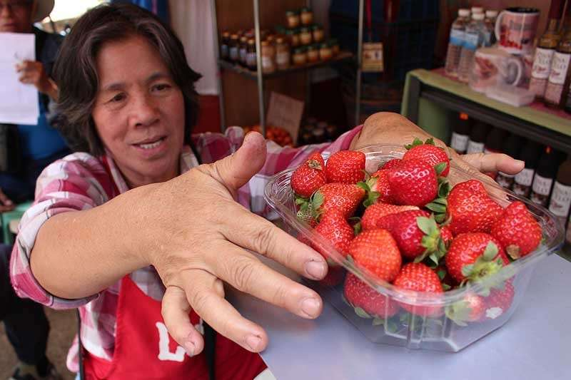BENGUET. Marina Salipio from Lubas, La Trinidad packs a half-kilo of strawberries to be sold for P100. (Photo by Jean Nicole Cortes)