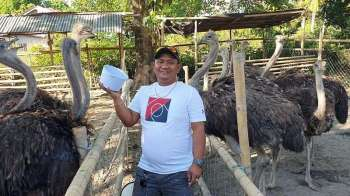AKLAN. Farm owner Ramon Dio feeds his Ostrich at his own backyard in Barangay New Buswang, Kalibo, Aklan. (Jun N. Aguirre)
