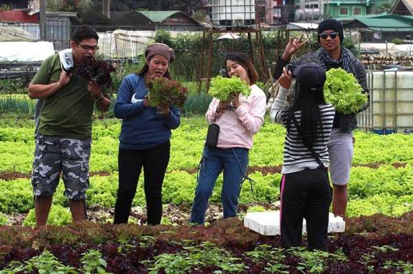 BENGUET. La Trinidad's strawberry farm remains a top tourist destination in Benguet province. Aside from strawberries, farmers also plant lettuce and other green leafy vegetables to attract more visitors. (Photo by Jean Nicole Cortes)