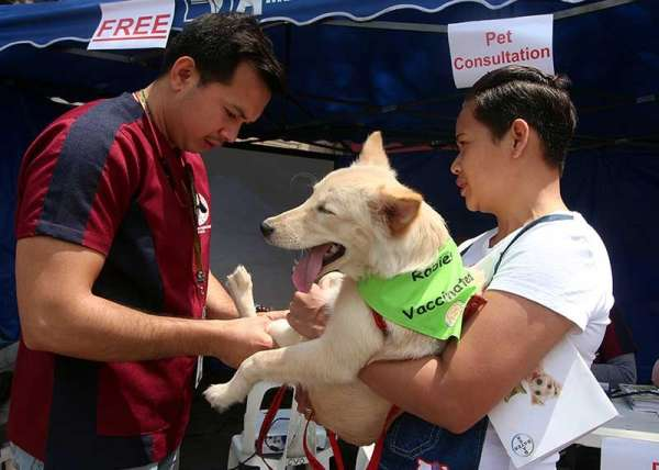 BAGUIO. A veterinarian administers free anti rabies vaccine and deworming courtesy of the Department of Agriculture Cordillera regional office on March 15. Pet owners are urged to have their dogs and cats vaccinated against rabies. (Photo by Jean Nicole Cortes)