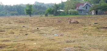 CAGAYAN DE ORO. Despite the rains brought by Tropical Depression Chedeng on Tuesday, March 19, the grass remains brown at a property located in the boundary of Barangays Pagatpat and Canitoan in Cagayan de Oro City. (Photo by Nef Luczon)