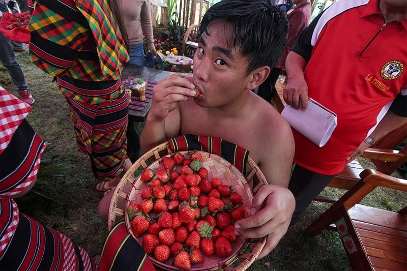 "BENGUET. A resident of La Trinidad enjoys a basket of fresh sweet strawberries as the town celebrates the 38th Strawberry Festival themed ""La Trinidad: My home. My Pride."" (Photo by Jean Nicole Cortes)"