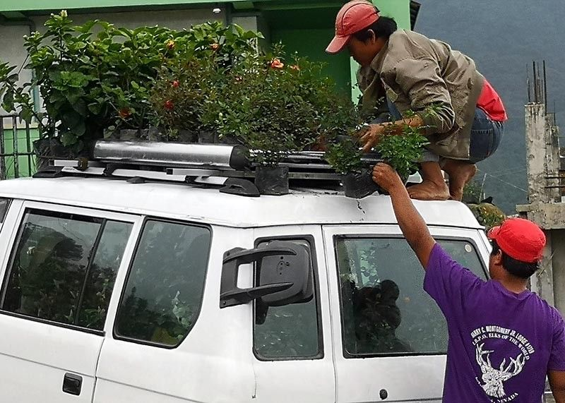 BENGUET. Farmers in Barangay Bahong, La Trinidad, Benguet load up potted cut flowers bound for the flower shops nationwide. The area is unscathed by the onslaught of El Niño phenomenon which hit the agricultural sector in other areas around the Philippines. (Photo by Dave Leprozo Jr.)