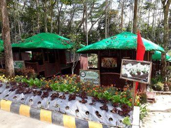 BUKIDNON. Binahon Agroforestry Farm sa Sonco, lungsod sa Lantapan, Bukidnon. (Hulagway kuha ni Kris C. Sialana)