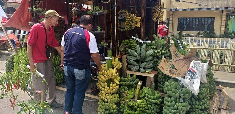 NEGROS. ONE of the booths showcasing various varieties of banana at the ongoing 22nd Banana Festival in La Castellana town, Negros Occidental. (Erwin Nicavera)