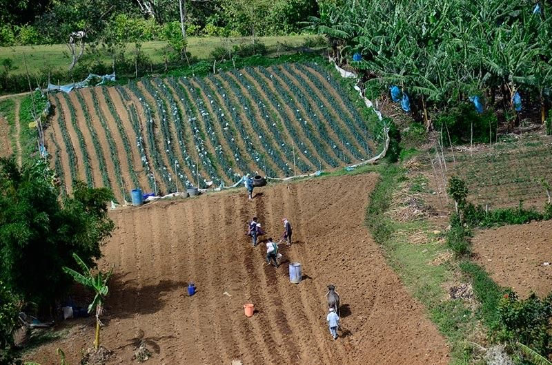 MinDA Assistant Secretary Romeo Montenegro said Mindanao's agricultural land area represents 36 percent of the country's total farm area but yields more than 40 percent of the country's total farm produce. (File Photo)