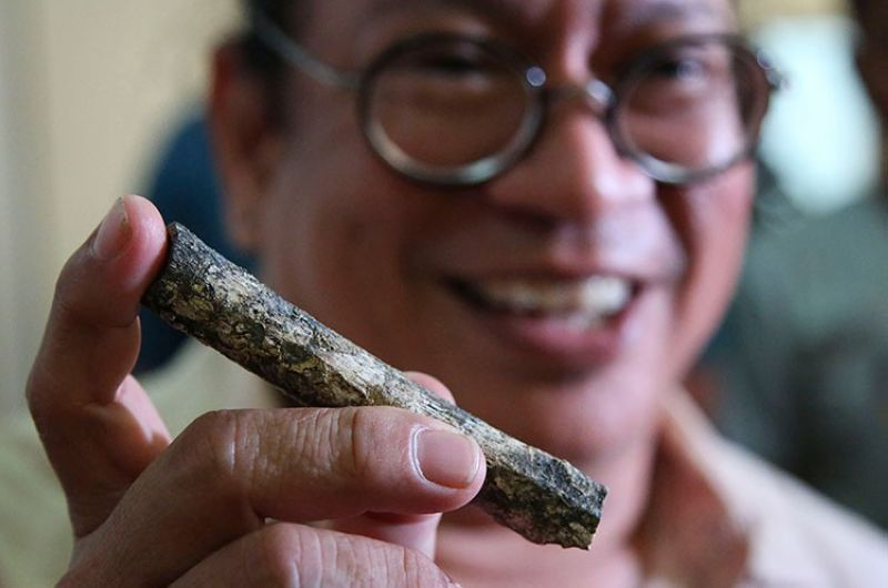 MANILA. Filipino archeologist Armand Salvador Mijares shows a femur bone, one of those they recovered from Callao Cave belonging to a new specie they called Homo luzonensis, during a press conference in Manila on Thursday, April 11, 2019. (AP)