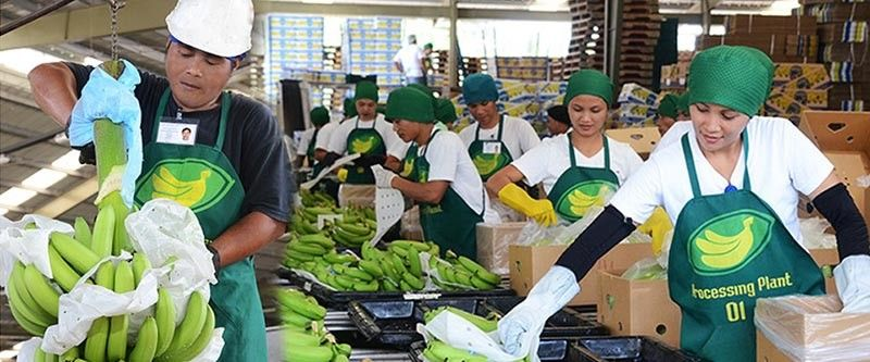DAVAO. PBGEA executive director Stephen Antig told SunStar Davao that despite being the top supplier of bananas in South Korea, the high import tariffs remain the sector's most pressing concern especially with some countries imposing zero tariffs in the next few years. (Photo from PBGEA)