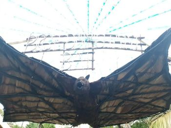 BACOLOD. This is a replica of an endemic bat displayed at the agro trade fair, which various species can be found at Damutan Valley still in Hinoba-an.