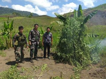 DAVAO. Joint elements uprooted 17,000 plants of marijuana with an estimated value of P3,400,000 based on the PDEA assessed value in Sitio Blabaluyong, Barangay Kimlawis, Kiblawan, Davao del Sur. (Photo courtesy of PRO-Davao)