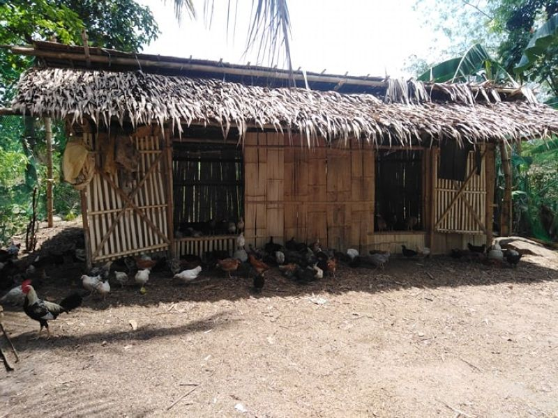 NEGROS. The free-range chicken production project of Humayan Nena Farmers Association in Purok Humayan, Barangay San Miguel in Murcia. (Contributed Photo)