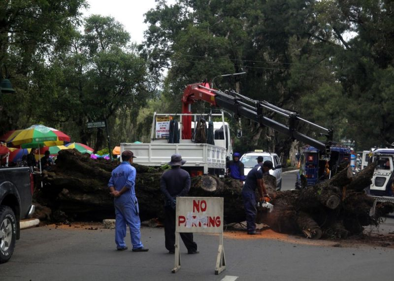 BAGUIO. City Environment and Parks Management Office (Cepmo) workers remove a dead tree at Burnham Park to prevent accident. Photo by Jean Nicole Cortes