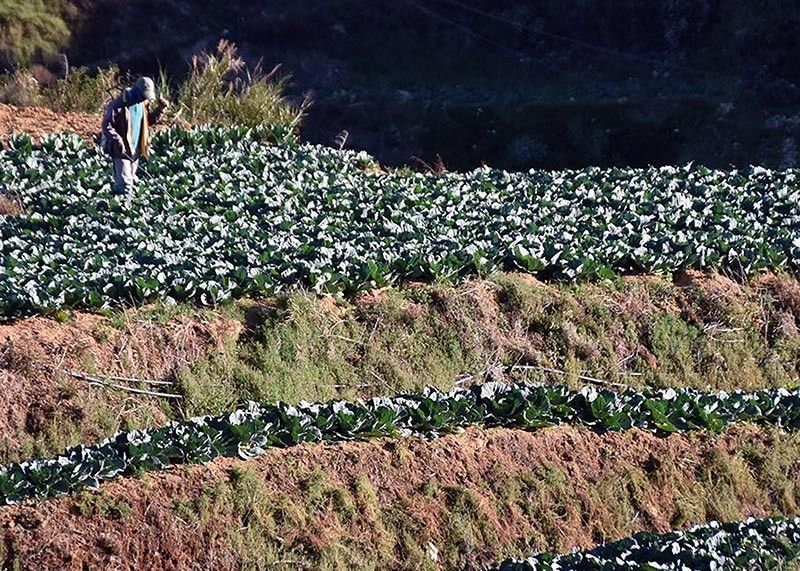 In a bid to help improve farm output in the Cordillera region, the Department of Agriculture is planning on a food quantification study and color coded mapping to guide farmers. (Photo by Redjie Melvic Cawis)