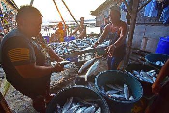 DAVAO. Gipangbahin sa mga lalaki ngadto sa nagkadaiyang banyera ang mga bangus nga bag-ong harvest gikan sa mga fish pens sa kadagatan sa Barangay Matina Aplaya, Davao City una kini timbangon ug dad-on sa mga merkado. (Macky Lim)