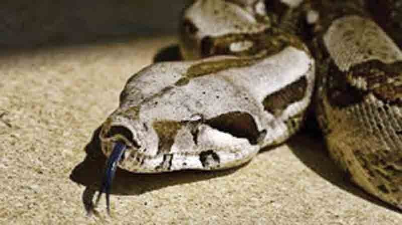 UN health agency seeks to halve number of snakebite deaths
