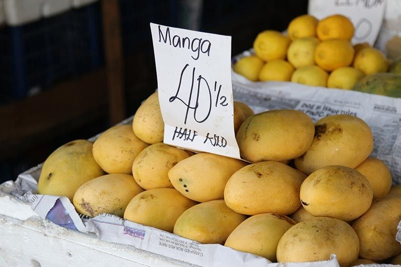 DAVAO. The Department of Agriculture (DA)-Davao assured that mango farmers in the region will not suffer from excess supply as majority of the volume of harvested mangoes are already sold in the market. (Photo by Mark Perandos)