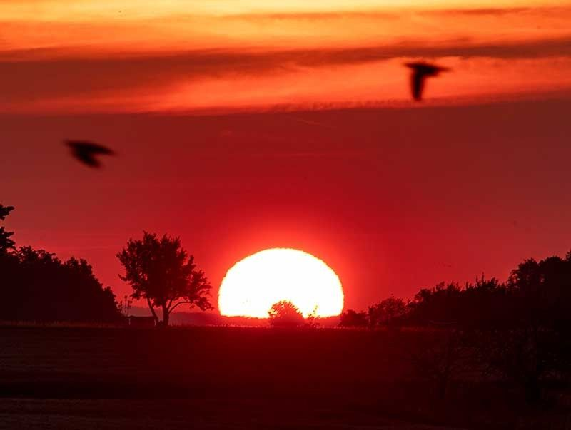 GERMANY. Birds fly by as the sun rises in Frankfurt, Germany, Monday, June 24, 2019. Germany expects hot temperatures during the next days. (AP)