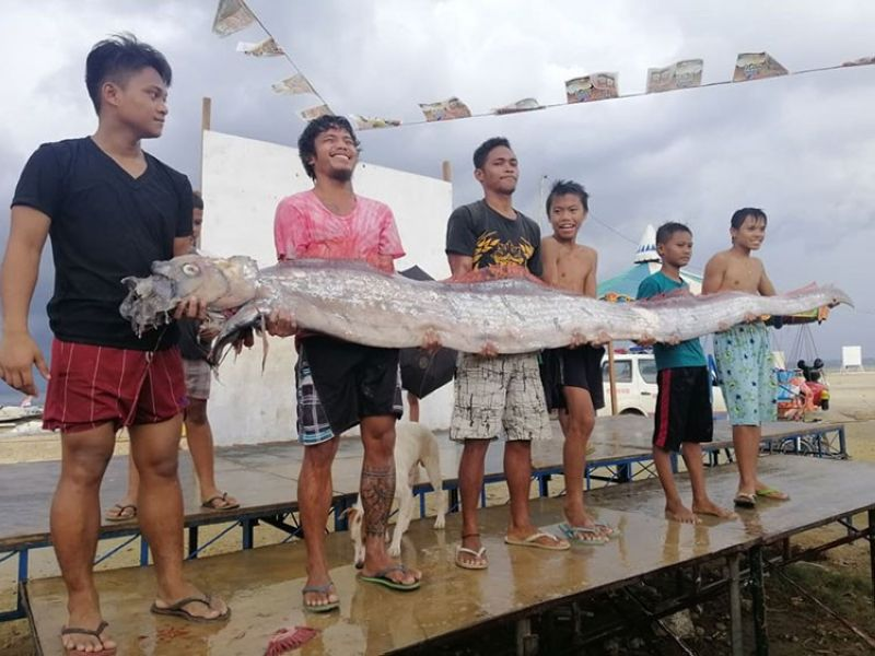 CEBU. An oarfish was found in Barangay Poblacion, Compostela, Cebu on Monday, June 24, 2019. (Photo from Compostela MDRRMO Facebook page)