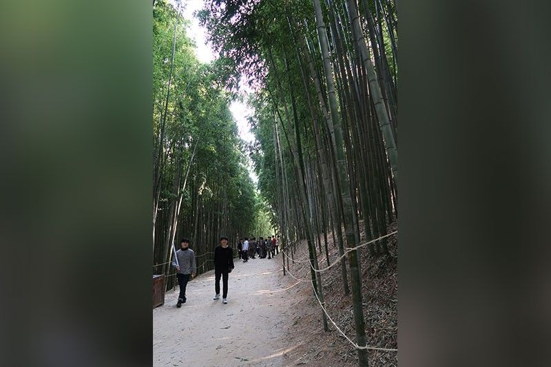 Bamboo Trail at the Juknokwon Bamboo Garden. (Photo by Tiffany Neri)
