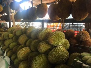DAVAO. The expected price of durian during Kadayawan will be as low as P50 per kilogram from P200 to P250 this July. (Cristita L. Canoy)