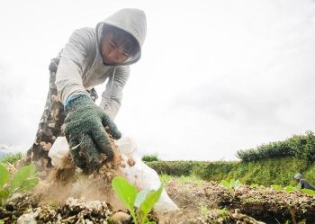 BENGUET. Jobert Batingwed, 14, from Suyo, Ilocos Sur, helps out in his uncle's farm in Barangay Buyacaoan, Buguias, Benguet as a means to support his studies. (Jean Nicole Cortes)