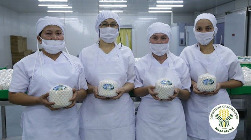 DAVAO. This week, a homegrown company, Eng Seng Food Products, in coordination with Department of Agriculture and Bureau of Plant Industry will ship 48 tons or 36,000 pieces of aromatic coconuts to Guangzhou and Xiamen, China. (Agri Info Davao photo)