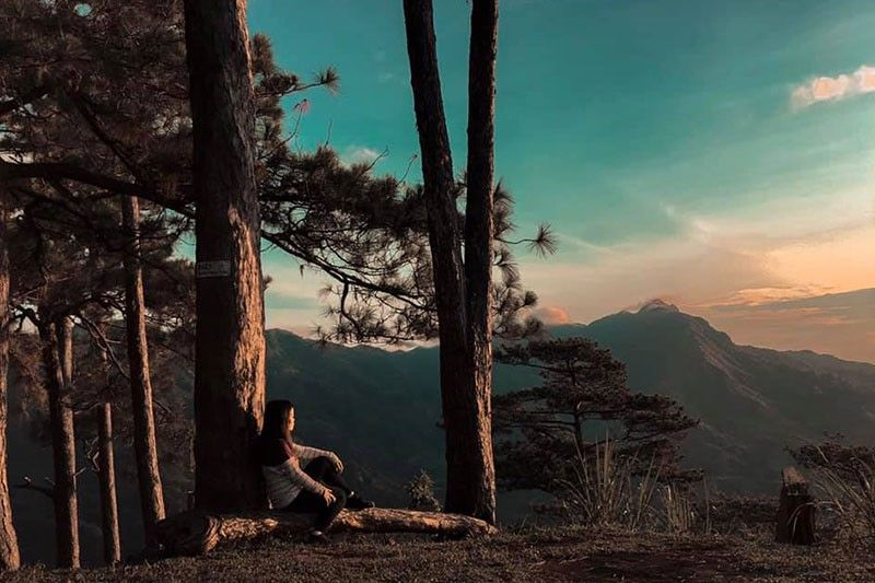 LITTLE BAGUIO: Gipalibutan sa pine trees ang Bucari ilabina ang Mansiga susama nga anaa ka sa Baguio. Gidili sab sa local government unit ang pagda-ob sanglit makadaot kini sa natural nga pagtubo sa mga pine trees. (Photo by Charry Lane Coronel)