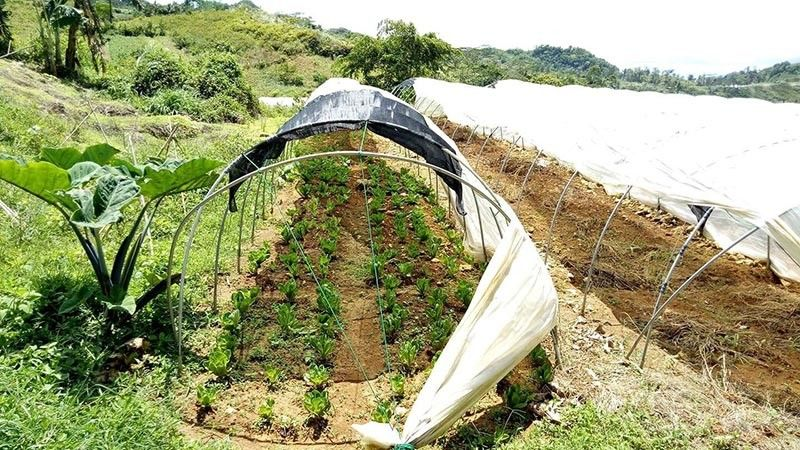 A NEW TOURISM SITE TO EXPLORE. The Department of Science and Technology and the local government of Dalaguete are working on the tourism accreditation of Dalaguete Vegetables techno-demo farm as a new attraction  in the south. It  will be packaged together with the Mt. Talongon Flower Garden. (Photo grabbed from DOST-Cebu Facebook page)