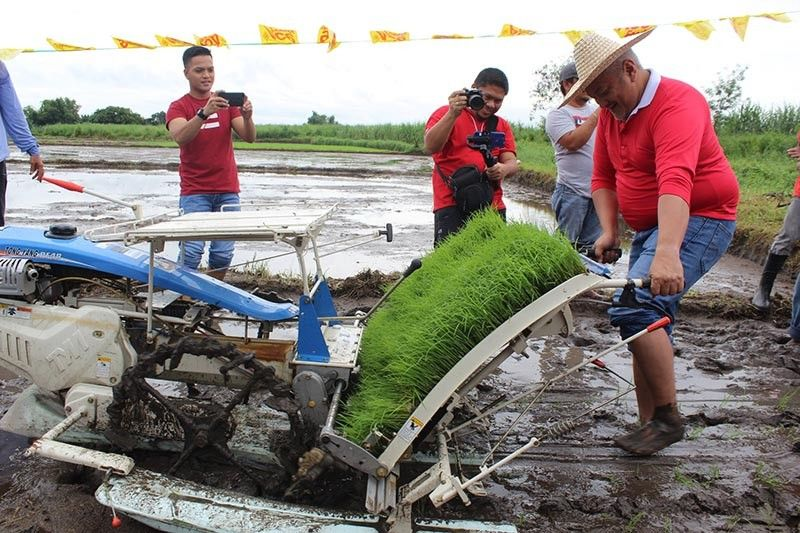 """PAMPANGA. Angeles City Mayor Carmelo """"Pogi"""" Lazatin Jr. tries his hand at planting rice in the fields of Barangay Sapalibutad. Lazatin attended the Technical Briefing on Paaralang Walang Dingding Hybrid Rice Model Farm. (Contributed Photo)"""