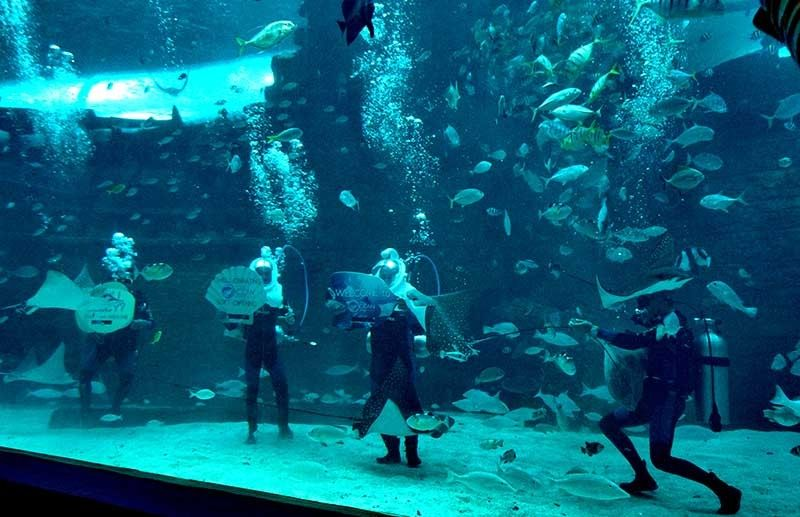 ANOTHER TOURIST DRAW. Cebu Ocean Park's opening will open Cebu City to more business, which will generate more employment and strengthen Cebu's standing in the global tourism map. (SunStar File Photo)