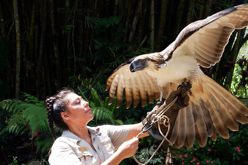DAVAO. Davao's very own Philippine eagle Sinag and his keeper, Lowhana Halaq, will be seen at the Raptors in Flight every Saturday starting this month. (Photo by Jinggoy Salvador)
