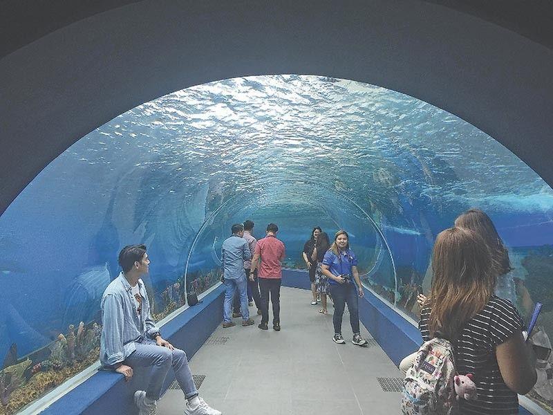 360 DEGREES: Wa ug tuo ingon man maghangad siguradong makakita ka sa marine species dinhi sa 360 degrees tunnel. / John Paul Pepito