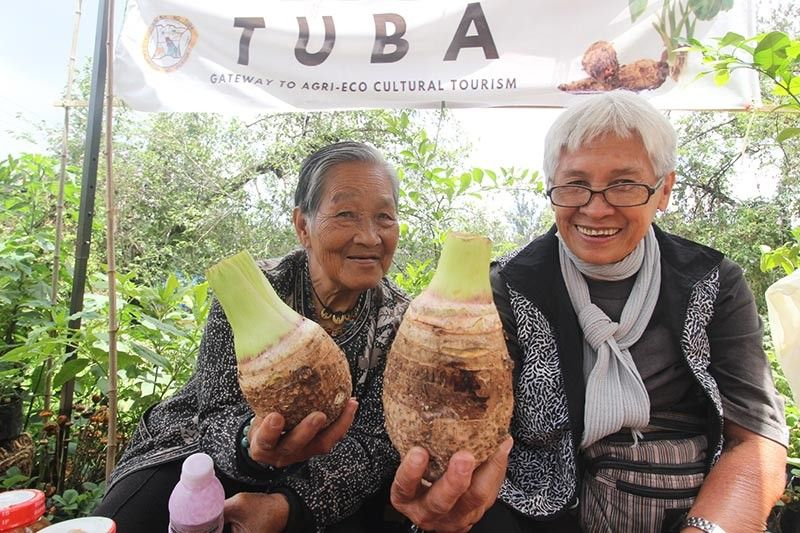 "AVA FEST. Elders showcase Tuba's one-town one product. Tuba is set to celebrate its 6th Ava Festival on September 16-20 with the theme, ""Strengthening Our Culture and Community Harmony Towards Enriched Agri-Tourism Industry."" (Jean Nicole Cortes)"