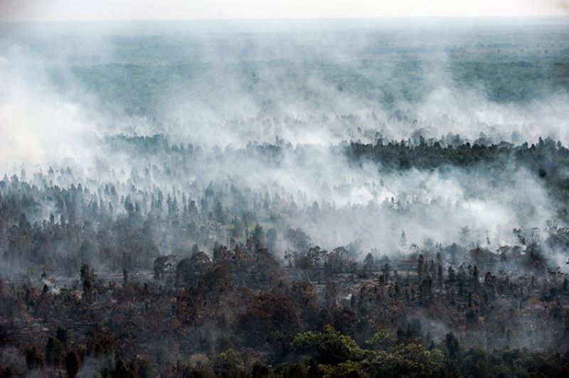 INDONESIA. Smoke billows from forest fires in Kahayan Hilir, Central Kalimantan, Indonesia, Wednesday, September 18, 2019. Forest fires have razed hundreds of thousands of hectares of land in Sumatra and Borneo island, spreading a thick, noxious haze around Southeast Asia. (AP)