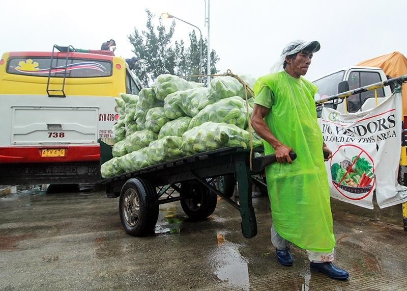 BAGUIO. A vegetable porter delivers freshly harvested sayote to the La Trinidad Trading Post. Farmers in the Cordillera are challenged to sustain their crops due to the recent continuous rains which vastly affected the crop's selling price in the market. (Photo by Jean Nicole Cortes)