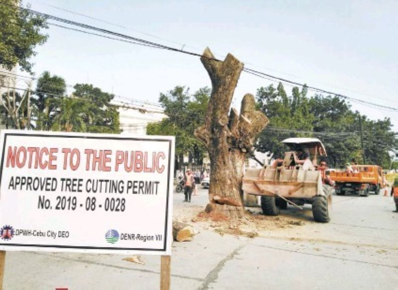 PERMIT ISSUED. Trees on Don Gil Garcia St. in Barangay Capitol Site, Cebu City were cut down last September with government approval.  <b>(Amper Campaña)</b>