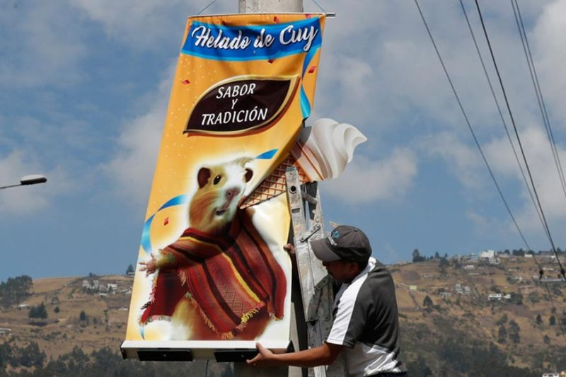 ECUADOR. In this September 28, 2019 photo, a worker installs a banner promoting