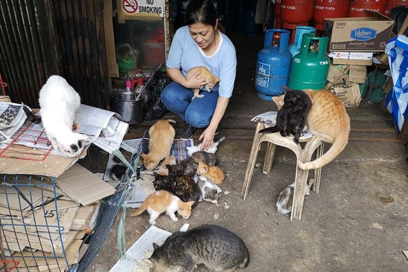 BAGUIO. Leah Villanueva treats stray, lost and abandoned cats to a hefty lunch. Leah has been adopting cats for more than five years, treating her adopted cats the same as humans, giving her contentment and joy in giving the abandoned, stray and lost cats a place they can be fed and housed. (Dave Leprozo Jr.)