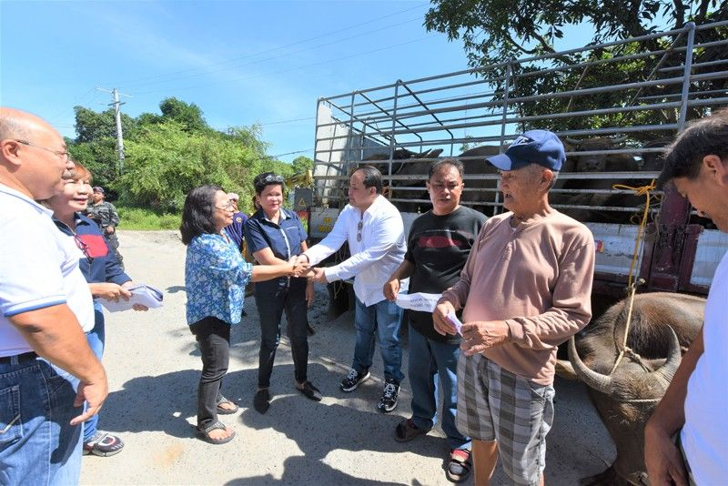 PAMPANGA. Governor Dennis Pineda leads the distribution of 28 carabaos to farmer-beneficiaries on Tuesday, October 8, at the PEO Compound, Barangay Sindalan in the City of San Fernando. (PR)