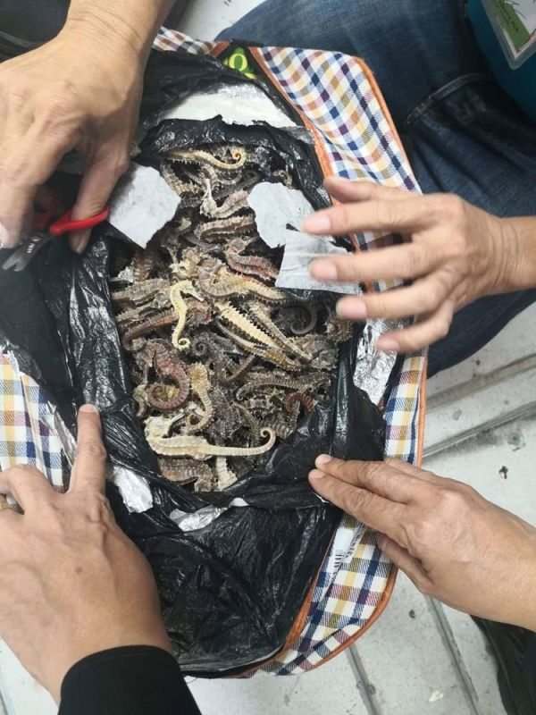 Around 53 kilograms of dried seahorses were recovered by the Bureau of Customs (BOC) and the Bureau of Fisheries and Aquatic Resources (BFAR) from three Chinese nationals who reportedly planned to smuggle the items once they arrived in Macau. (Foto courtesy of the BOC Port of Cebu Facebook page)