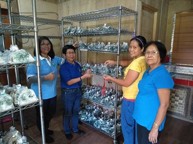 GOOD FUNGUS. Trichoderma grown in cracked corn and ready for distribution at the Rockett Trichoderma Village Level Biocon Laboratory, Kiblawan, Davao del Sur. (from left, Fe S. Simbahon- DA RCPC Trichoderma Laboratory In Charge, Marilou N. Infante DA RCPC Center Chief, Geraldine VLBL staff and Clara J. Velasco, DA RCPC Sr. Sci. Research Specialist). (Photo courtesy of RCPC, ILD, DA RFO-XI/2018)