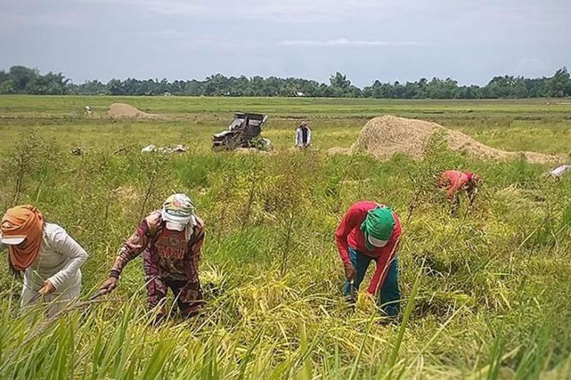 RAISING THE SKILLS OF FARMERS. The Technical Education and Skills Development Authority is tasked to teach skills on rice crop production, modern rice farming techniques, seed production, farm mechanization and technology transfer through farm schools nationwide. (SunStar file)