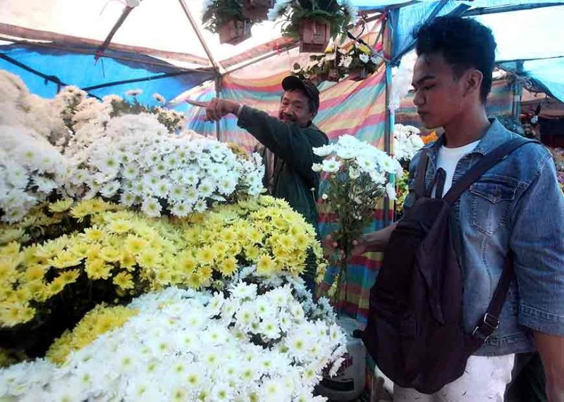 BAGUIO. As the nation celebrates All Saints' Day and All Souls' Day, cutflower farmers assured enough supply of flowers. (Jean Nicole Cortes)