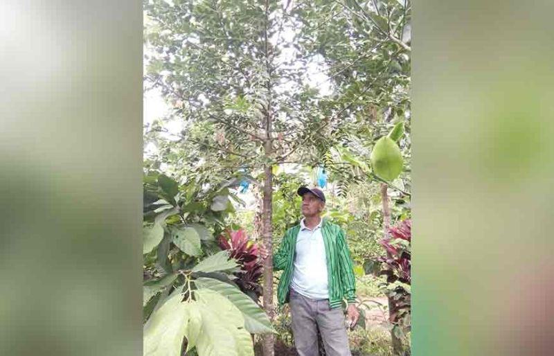 Datu Jovito Dolauto, chair of Sadopco, poses beside a year-old Almaciga tree.