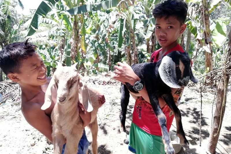 GOAT'S GRACE. The children of Rolando Sasil help their parents raise goats as this can help augment their family's income. (Contributed photo)