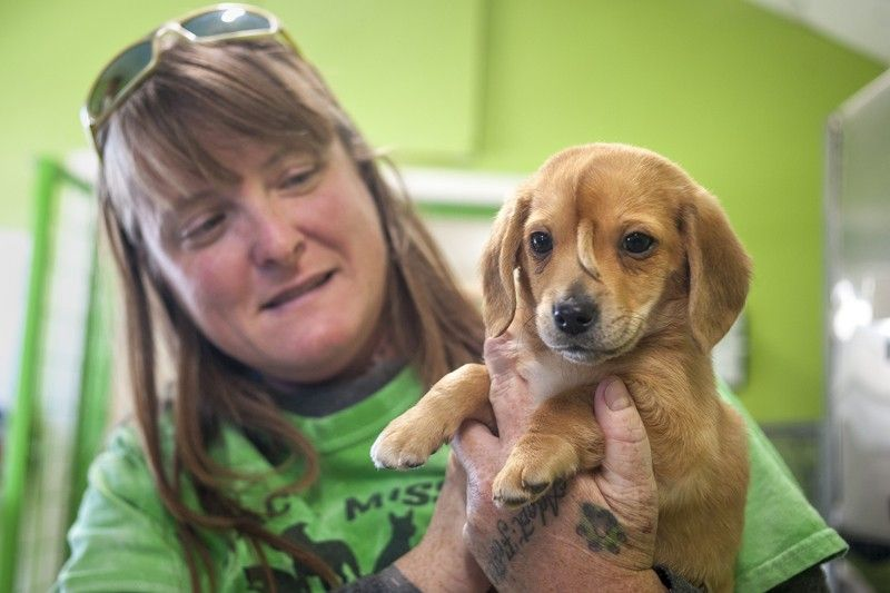 MISSOURI. In this November 13, 2019, file photo Mac's Mission animal rescue founder Rochelle Steffen holds a 10-week-old golden retriever puppy with a small tail growing between his eyes, in Jackson, Missori. The dog, named Narwhal the Little Magical Furry Unicorn, that drew international attention because of a tail-like growth on his face, and also drew some unwelcome attention, including death threats, will remain with Steffen, the founder of a group that rescued him. (AP)