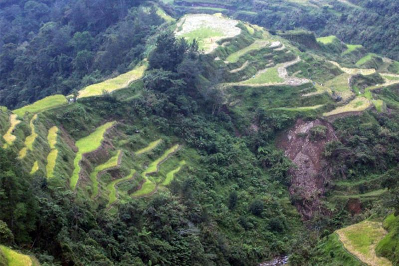 BANAUE. A portion of the Banaue Rice Terraces as seen from a view deck in the area. (Jean Nicole Cortes/SunStar File)