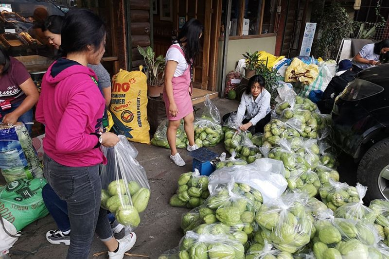 BAGUIO. At least 20 tons of highland vegetables and clothings are pouring in from Tinoc, Ifugao Province. Farmers, traders and concerned citizens donated to their fellow farmers who were the hardest hit sector during the recent Taal Volcano eruption in Batangas province. (Photo by Dave Leprozo)
